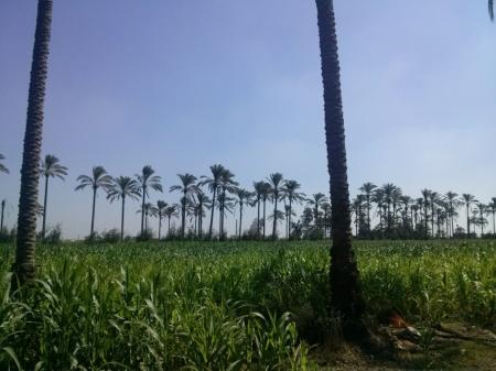 مزرعة ممتازة للبيع بمركز ابو حمص - البحيرة