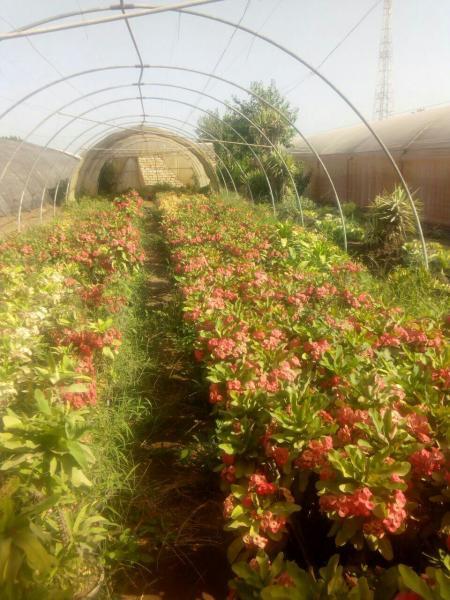 نباتات زينة و نجيل طبيعى شركة مينا فارم